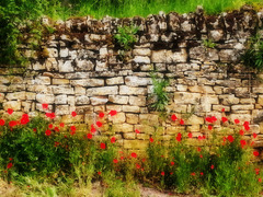 Pierres sèches et coquelicots / Dry stones and poppies [ON EXPLORE]