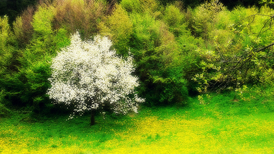 Spring colours (stylized)