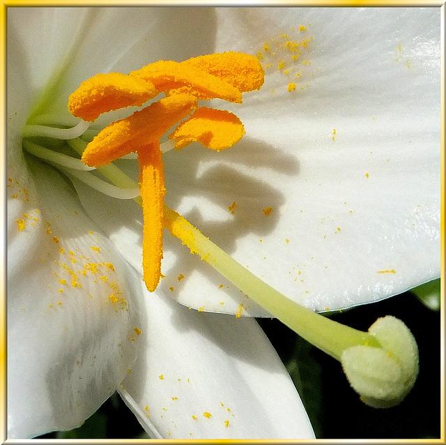 Lilie inside...