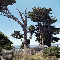 Beach Access Denied