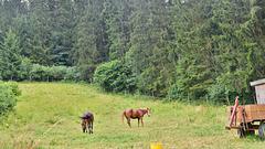 Pferde auf der Wiese.