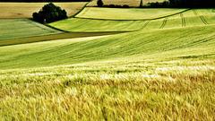Swinging summer fields