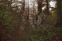 Mein kleiner Urwald vor der Haustür - My little jungle at the front door