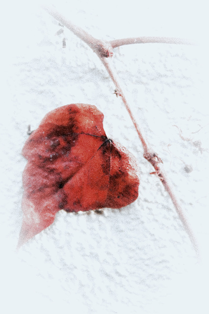 A Leave on the Wall