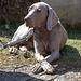 20150419 7684VRAw [D~SHG] Hund, Paschenburg, Schaumburg