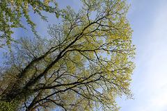 Der April ist gekommen, die Bäume schlagen aus.....