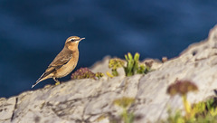 Pájaro al borde del acantilado
