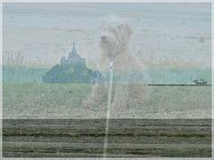 Collage de deux photos avec Photoscape : Ma chienne Giseh à SAINT BENOIT DES ONDES  avec vue sur le Mont Saint Michel