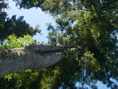 Beauté de l'arbre