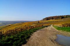 vignes Marne