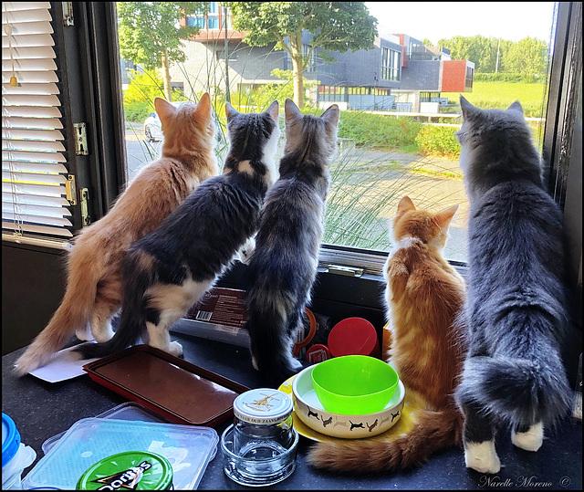 Neighbourhood Watch Team On Duty!