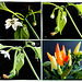 Chilli breeding from seeds... ©UdoSm