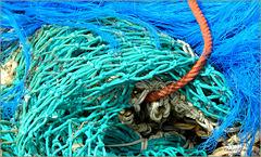 Bold Sea colored Nets... (+ PiP)