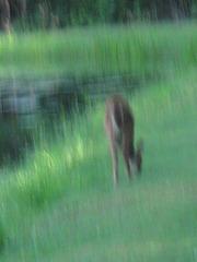 """Bambi Surreal"""