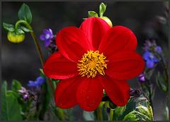 le temps des fleurs .....