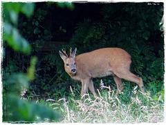 Bambi est revenu