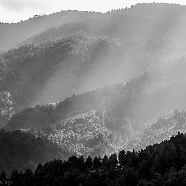 Backlit Bumthang woods