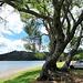Tree At Blue Lake.
