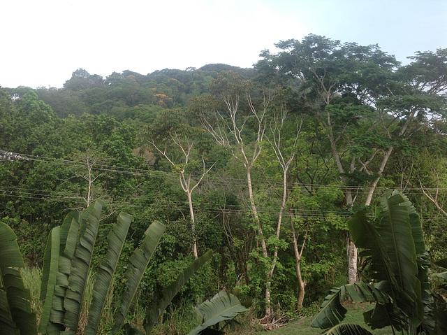 Jungle at your doorstep Gamboa