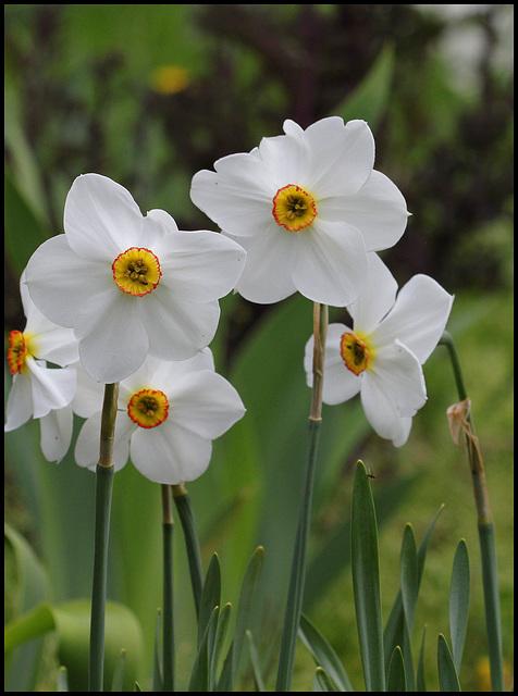 Narcisse des poètes (3)
