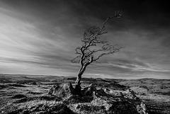 #35 - Dartmoor -  20150413