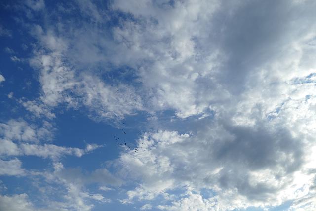 Himmel: wolkig mit kleinen Fliegern