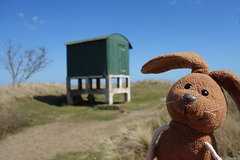 Tentsmuir observation hut