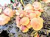 Fungi in Our Garden