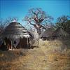 Planet Baobab.