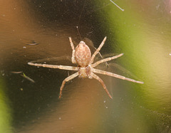 SpiderIMG 3988