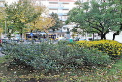 Small garden between Benfica's blocks - III