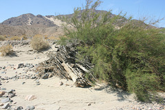 Driftwood in the Desert