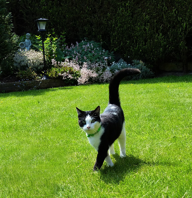 Long Tailed Kitty