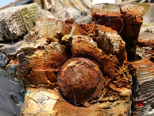 Rust & Seed