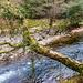 River Dart - 20160320