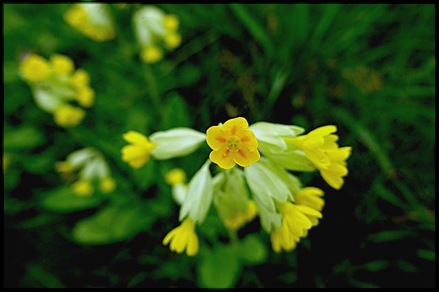 Eclat de printemps / Spring glow
