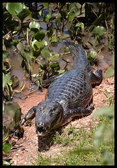 Brazil...Pantanal roadside