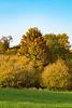Herbstliche Bäume am Döhmberg