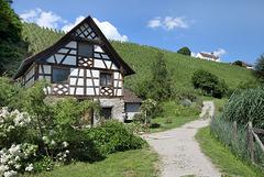 Kartause Ittingen - Das Rebhaus am Weg nach Warth-Weiningen