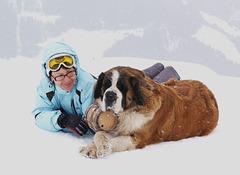 Swiss Mountain Rescue Dog