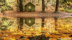 Autumn pool