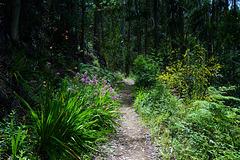 Wandern durch ein Blumenparadies - Walking through a flower Paradise - Please view on black!