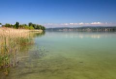 Bodensee (im Hintergrund Konstanz)