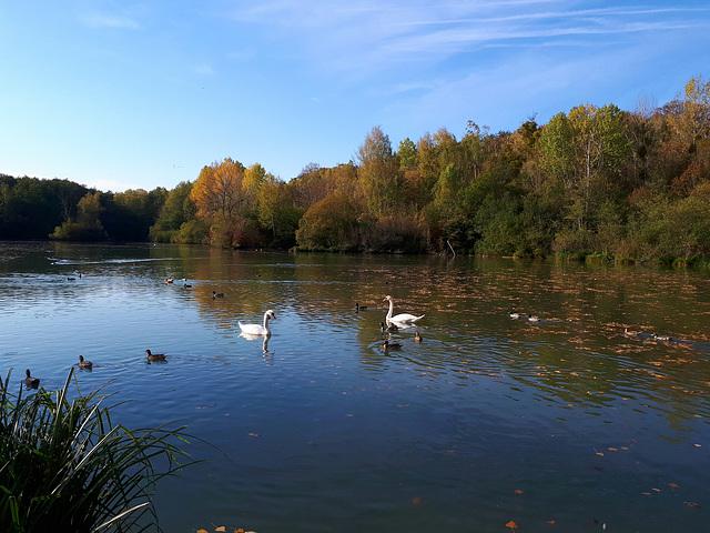 Sur l'étang