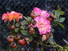 Autumnal Fence - HFF !