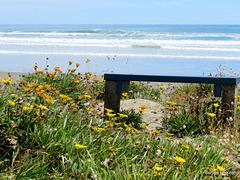 Whakatane Beach