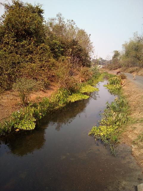 Des vaches et leur ruisseau botanique