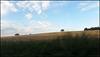 lone trees on the horizon