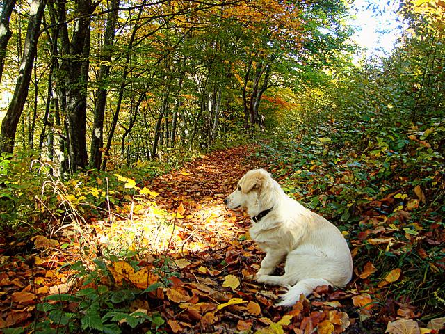 Enjoyment of autumn