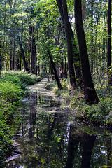 Fließe im Spreewald